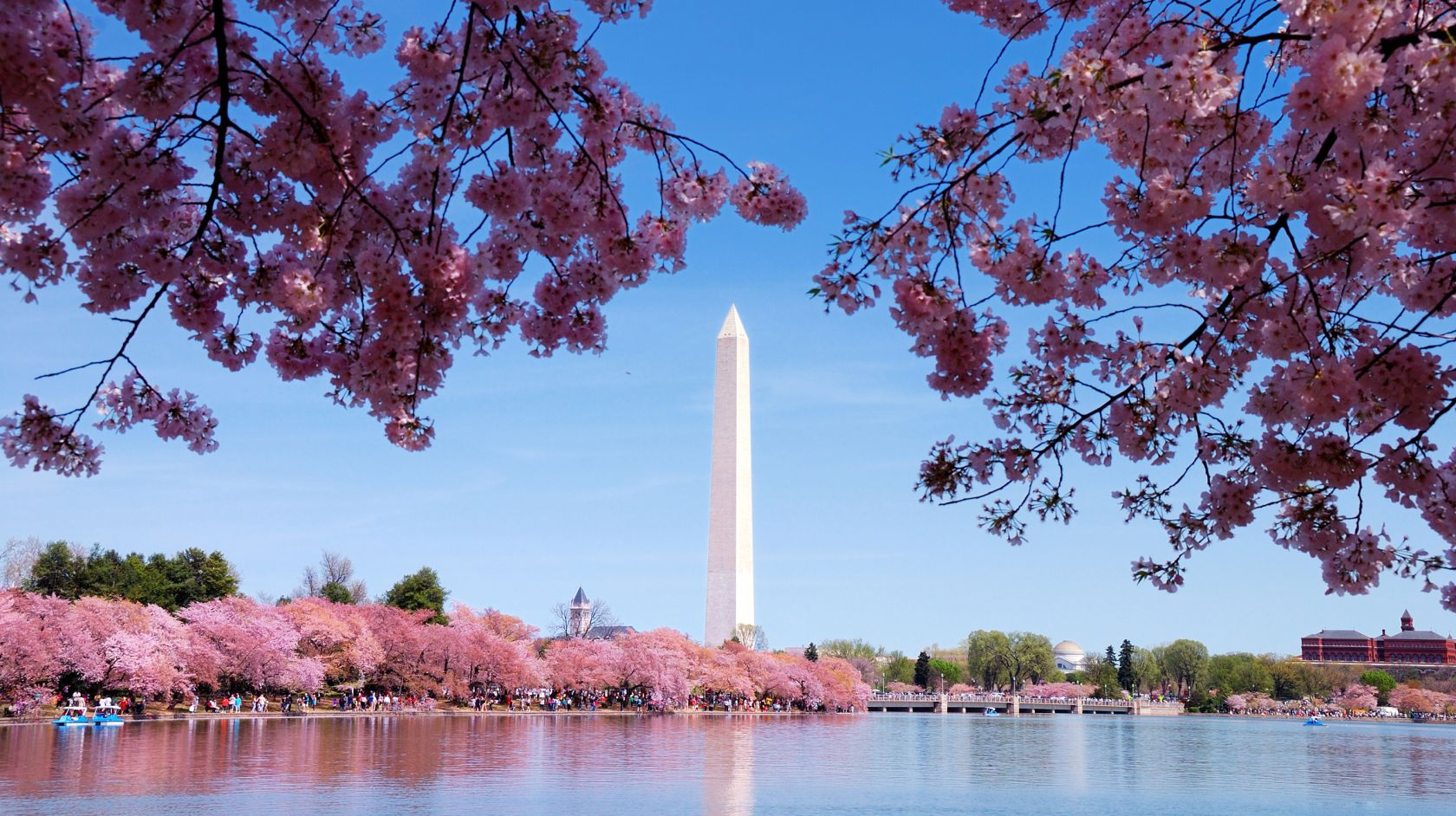 view of cherry blossoms and washington monument